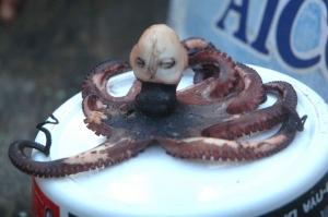 gurita-alien