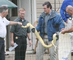ular pyton